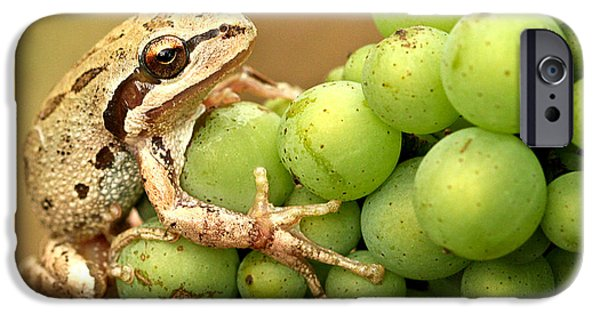 Amphibians Photographs iPhone Cases - Catching a ride on the pinot iPhone Case by Jean Noren