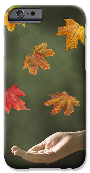 Catching Leaves iPhone Case by Amanda And Christopher Elwell