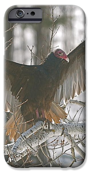 Catching some rays iPhone Case by Sandra Updyke