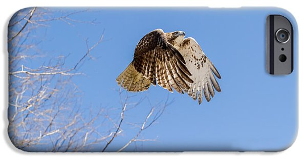 Hawk iPhone Cases - Catching the Sun iPhone Case by Bill  Wakeley