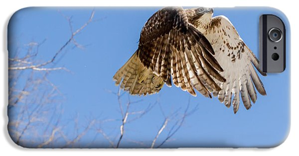 Redtail Hawk iPhone Cases - Catching The Sun Square iPhone Case by Bill  Wakeley