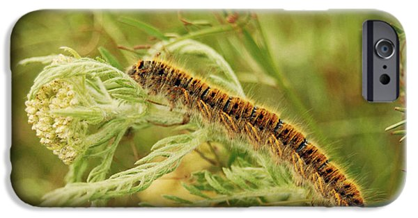 Nature Study Pyrography iPhone Cases - Caterpillar iPhone Case by Christo Christov