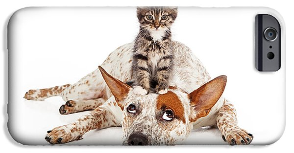 Cattle Dog iPhone Cases - Catte Dog With Kitten on His Head iPhone Case by Susan  Schmitz