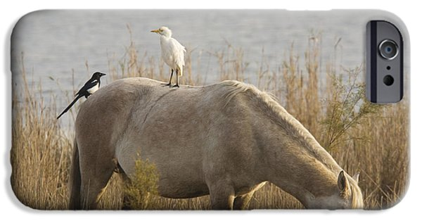 Cattle Egret iPhone Cases - Cattle Egret And Magpie Pica Pica iPhone Case by Bob Gibbons