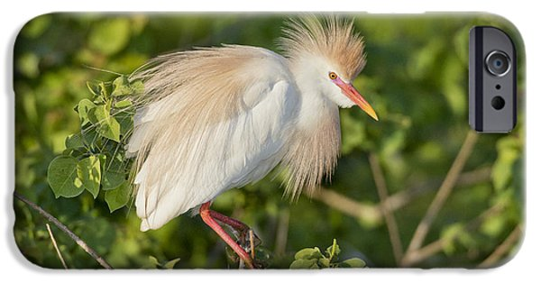 Cattle Egret iPhone Cases - Cattle Egret iPhone Case by Anthony Mercieca