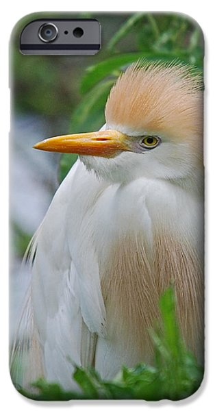 Cattle Egret iPhone Cases - Cattle Egret iPhone Case by Skip Willits