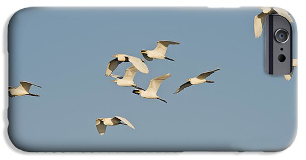 Cattle Egret iPhone Cases - Cattle Egrets iPhone Case by Anthony Mercieca