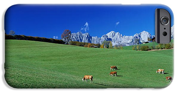 Going Green iPhone Cases - Cattle Graze In Alps Wilder Kaiser iPhone Case by Panoramic Images