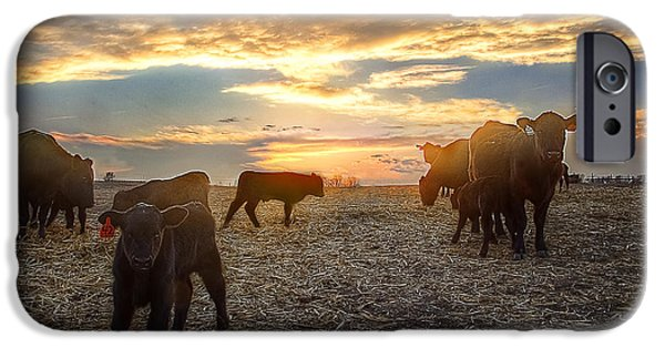 Pasture iPhone Cases - Cattle Sunset 2 iPhone Case by Thomas Zimmerman