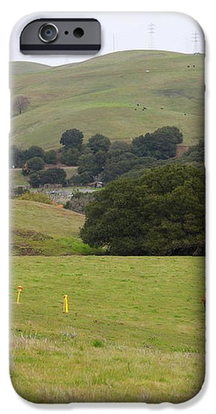 Cattles at Fernandez Ranch California - 5D21061 iPhone Case by Wingsdomain Art and Photography