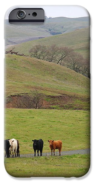 Cattles at Fernandez Ranch California - 5D21062 iPhone Case by Wingsdomain Art and Photography