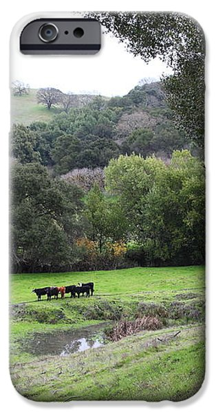 Cattles at Fernandez Ranch California - 5D21066 iPhone Case by Wingsdomain Art and Photography
