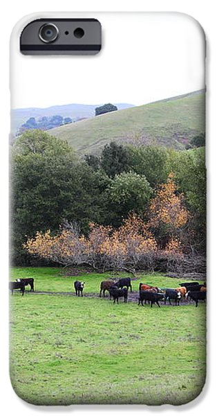 Cattles at Fernandez Ranch California - 5D21070 iPhone Case by Wingsdomain Art and Photography