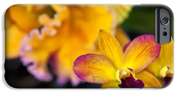 Cattleya iPhone Cases - Cattleya Orchid iPhone Case by Chris Flees