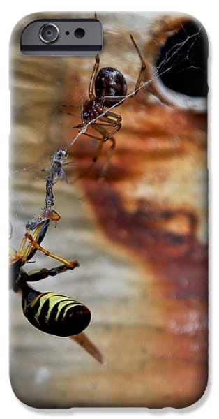 Becky Photographs iPhone Cases - #caught iPhone Case by Becky Furgason