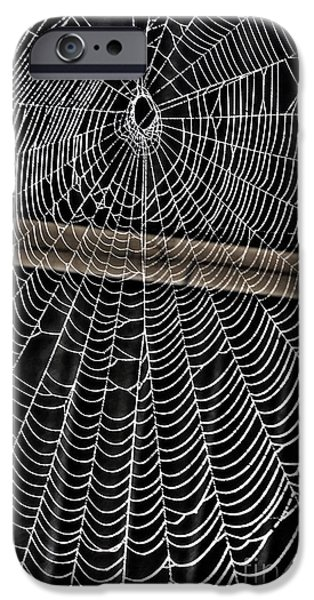 Deceit iPhone Cases - Caught Up in Various Webs iPhone Case by Dan Stone