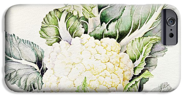 Botanical Photographs iPhone Cases - Cauliflower Study, 1993 Wc iPhone Case by Alison Cooper