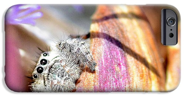 Jumping Spiders iPhone Cases - Cautious iPhone Case by Fraida Gutovich