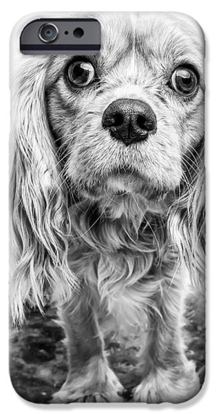Black Dog iPhone Cases - Cavalier King Charles Spaniel Puppy Dog Portrait iPhone Case by Edward Fielding