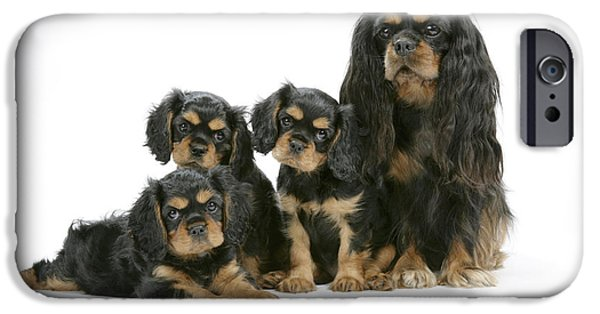 Dog And Toy iPhone Cases - Cavalier King Charles Spaniels iPhone Case by John Daniels