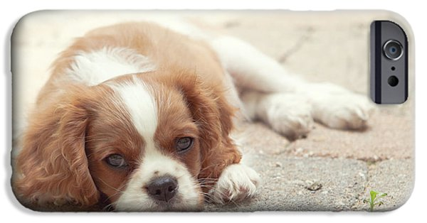 Kaypickens.com iPhone Cases - Cavalier Puppy iPhone Case by Kay Pickens