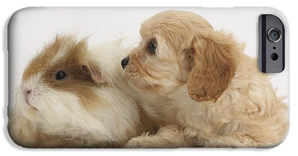 Cute Puppy iPhone Cases - Cavapoo Pup And Guinea Pig iPhone Case by Mark Taylor