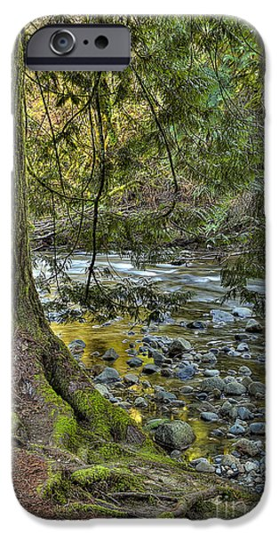 Tree Roots iPhone Cases - Cedar Tree by Kanaka Creek iPhone Case by Sharon  Talson