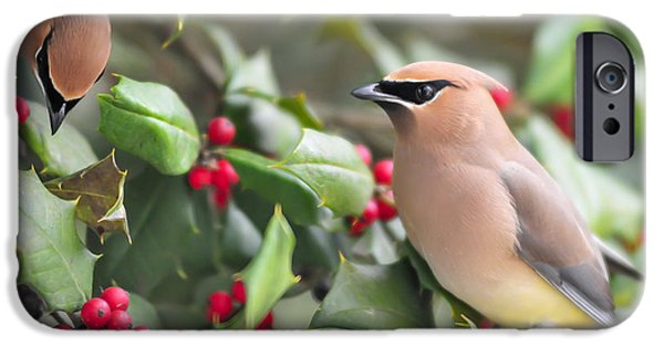 Christmas Greeting iPhone Cases - Cedar Waxwing in Holly Tree iPhone Case by Terry DeLuco