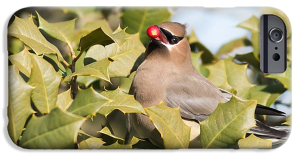Photographs With Red. iPhone Cases - Cedar Waxwing with Berry iPhone Case by Terry DeLuco