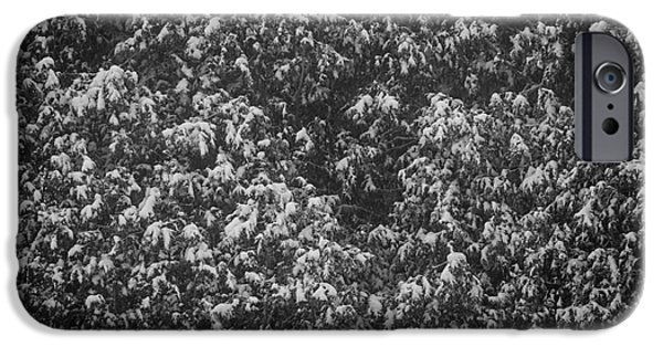 Winter Storm iPhone Cases - Cedars in snow iPhone Case by Elena Elisseeva