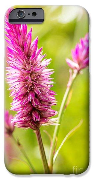 Close Up Floral Pyrography iPhone Cases - Celosia Argentea iPhone Case by Eyzen M Kim
