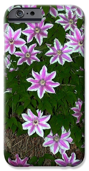 Fauna Pyrography iPhone Cases - Center Stage iPhone Case by DUG Harpster