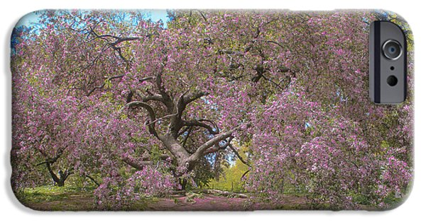 Springtime In The Park iPhone Cases - Central Park Pink Flowered Tree 2 iPhone Case by Muriel Levison Goodwin