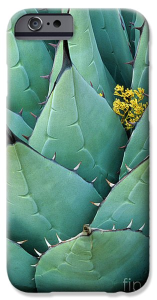 Needle iPhone Cases - Century Plant and Tiny Blossom iPhone Case by Inge Johnsson