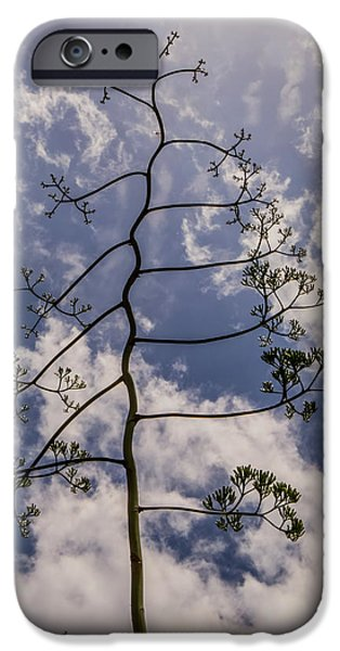 Garden Photographs iPhone Cases - Century plant iPhone Case by Zina Stromberg