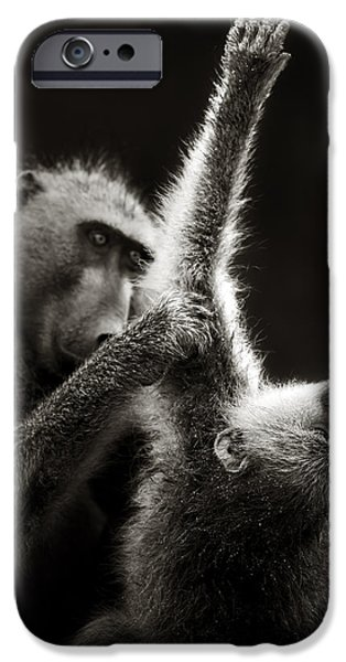 Safari iPhone Cases - Chacma Baboons Grooming iPhone Case by Johan Swanepoel
