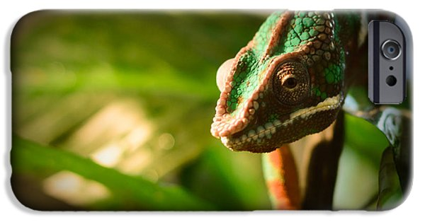 Chameleon iPhone Cases - Chameleon iPhone Case by Marco Oliveira