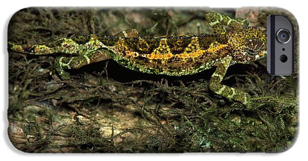 Chameleon iPhone Cases - Chameleon On A Lichen Covered Tree iPhone Case by Gregory G. Dimijian