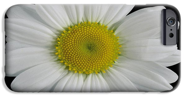 Useful iPhone Cases - Chamomile Flower iPhone Case by Cheryl Young