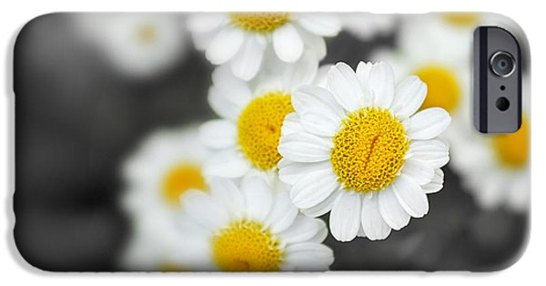 Close Up Floral iPhone Cases - Chamomile iPhone Case by Jane Rix