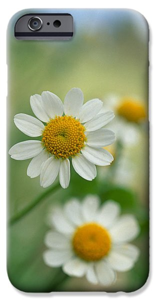 Chamomile iPhone Case by Kathy Yates