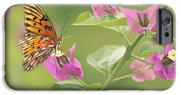 Fauna iPhone Cases - Chance Encounter iPhone Case by Kim Hojnacki