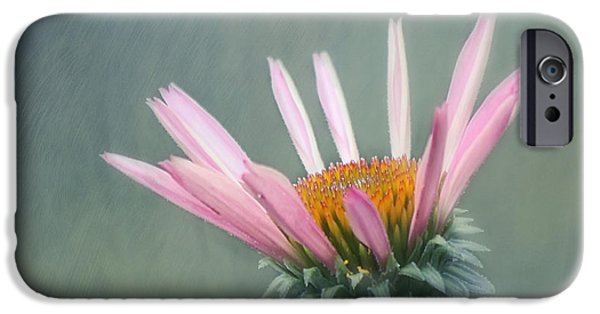 Cone Flower iPhone Cases - Change iPhone Case by Kim Hojnacki