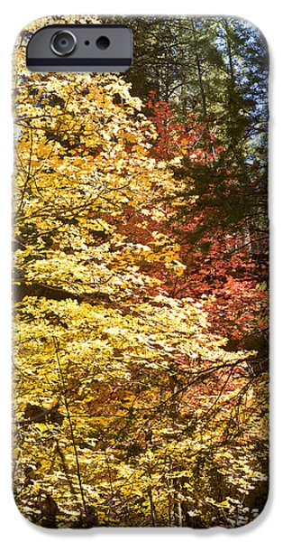 Oak Creek iPhone Cases - Changes iPhone Case by Bj Lewis
