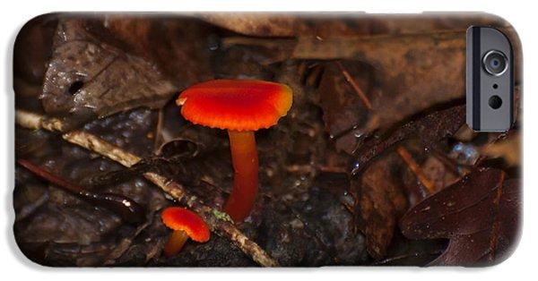 Mushroom Digital Art iPhone Cases - Chanterelle waxy cap mushroom iPhone Case by Chris Flees