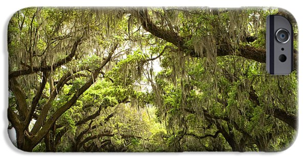 Live Oaks iPhone Cases - Charleston Avenue of Oaks iPhone Case by Stephanie McDowell