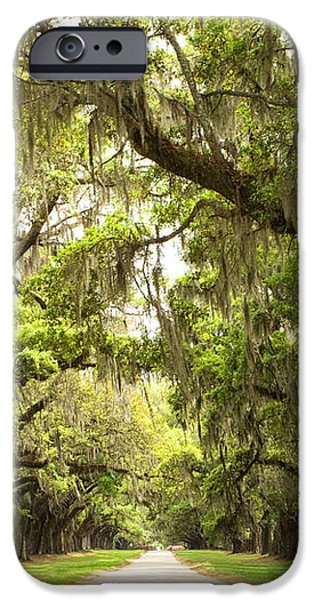 Charleston Avenue of Oaks iPhone Case by Stephanie McDowell