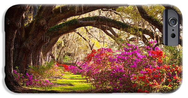 Basin iPhone Cases - Charleston SC Magnolia Plantation Gardens - Memory Lane iPhone Case by Dave Allen