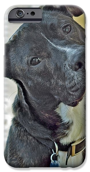Mixed Labrador Retriever iPhone Cases - Charlie iPhone Case by Lisa  Phillips