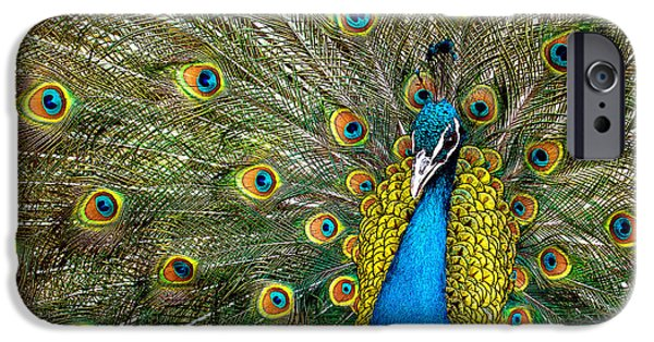 Fauna iPhone Cases - Charming iPhone Case by Ivan Vukelic